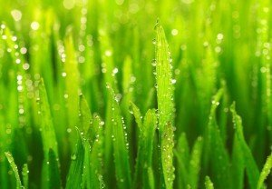 dew droplets on grass via microsoft clipart for fb