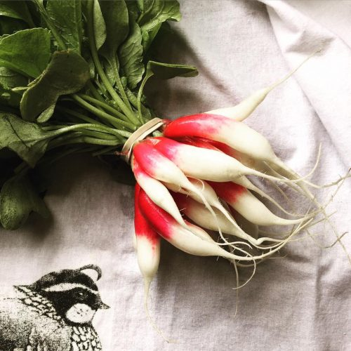 A bunch of clean radishes on a white cloth.
