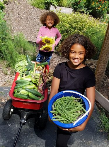 Two girls with wheelbarrow and pail full of garden vegetables.