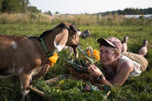 Woman lying down in field, feeding vegetables to a goat.