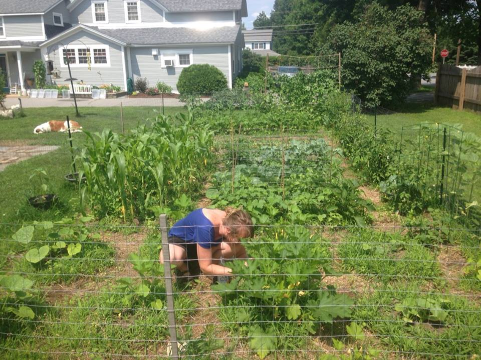 Feed Your Garden: Fertilizing for beginners - Green Mountain Compost