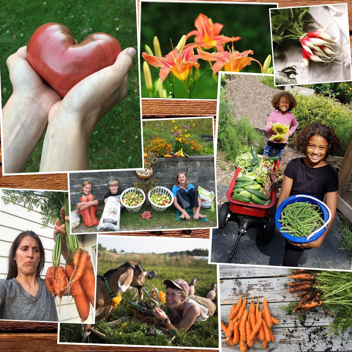 Photo collage of vegetables, flowers, and people.