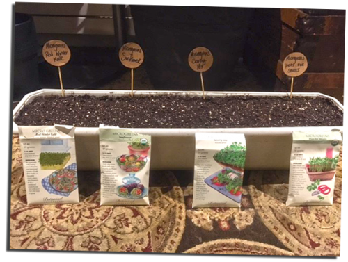 Seed packets in front of windowsill planter filled with soil.