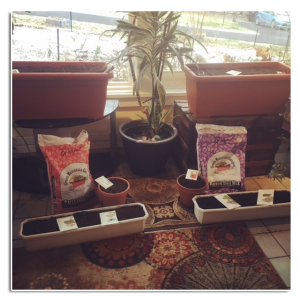Flower pots and sill trays on the sunroom floor with Green Mountain Compost soils.