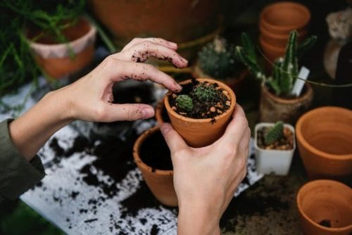 Two hands holding small clay pot with succulents.